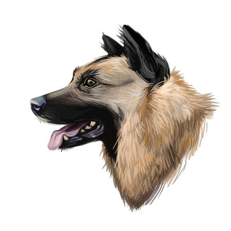 Kunming wolfdog, dog originated in China, digital art illustration. Chinese established breed, trained as military assistant and rescue animal. Pet with stuck out tongue on blue background