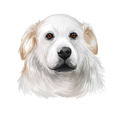 Kuvasz Hungarian ancient breed of livestock dog digital art illustration. Pet and guard dog, originated in Hungary as protector of farmers livestocks. Purebred animal puppy isolated portrait Stock fotó - 130780716