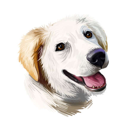 Labrador husky Canadian pet portrait digital art illustration. Mammal originated in Canada trained to pull sled. Pet of large sizes having gentle character, drawing of purebred puppy with tongue