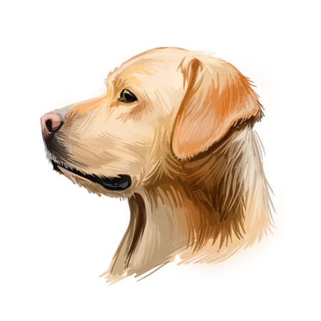 Labrador retriever portrait of purebred digital art illustration. Canadian mammal gun dog, hunting breed originated in Canada. Doggy closeup drawing with puppy lab with large ears isolated canine Stock fotó