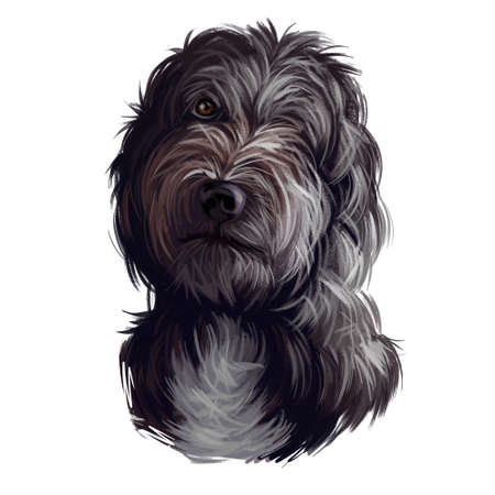 Portrait of lagotto romagnolo puppy dog digital art illustration. Water pet of Italian origin, region of Romagna. Pet with long fur and kind eyes. Gun hunting mammal animal domesticated by people