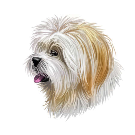 Lhasa apso pet with white fur, portrait of canine digital art illustration. Non-sporting dog breed originating in Tibet, indoor-monastery sentinel doggy. Pet closeup isolated on white background. Stock Photo