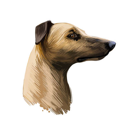 Magyar agar Hungarian breed closeup digital art illustration. Greyhound originated in Hungary, gazehound domesticated sighthound portrait. Purebred canine with long muzzle, isolated on beige Stock fotó