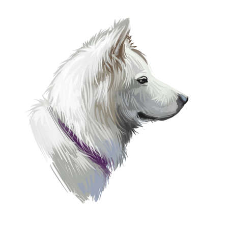 Pungsan Dog portrait isolated on white. Digital art illustration of hand drawn dog for web, t-shirt print and puppy cover design. Reklamní fotografie