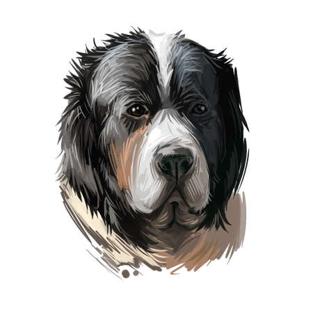 Pyrenean Mastiff dog portrait isolated on white. Digital art illustration of hand drawn dog for web, t-shirt print and puppy food cover design.