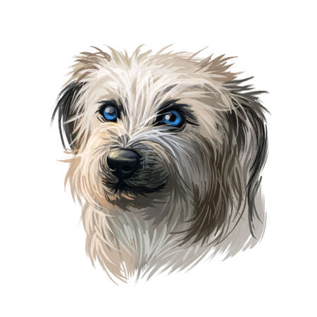 Pyrenean Shepherd dog portrait isolated on white. Digital art illustration for web, t-shirt print and puppy food cover design. Berger des Pyrenees, Pastor de los Pirineos, Petit Pyrenees Sheepdog Stock Illustration - 130994656