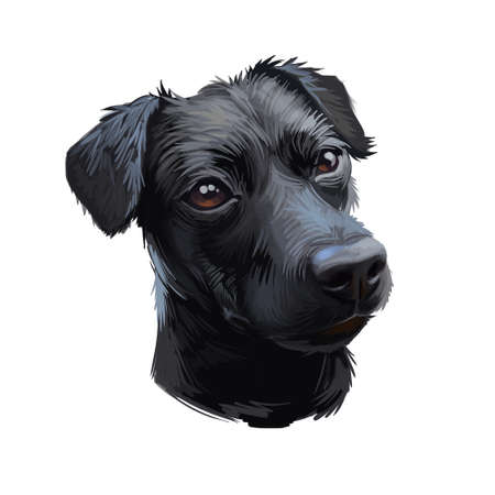 Patterdale Terrier dog portrait isolated on white. Digital art illustration of hand drawn dog for web, t-shirt print and puppy food cover design, clipart. Purebreed of black color, t-shirt print