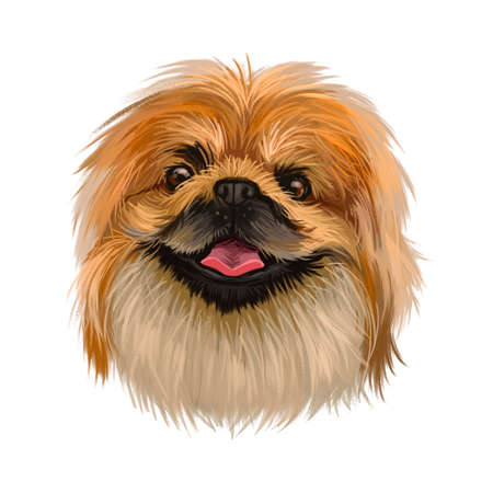 Pekingese dog portrait isolated. Digital art for web, t-shirt print and puppy food cover design, clipart. Toy breed, Beijingese, Peking Beijing Lion Dog, Chinese Spaniel, Pelchie, Peking Palasthund Reklamní fotografie