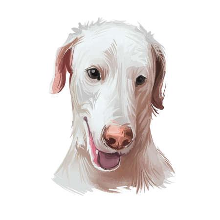 Rajapalayam dog portrait isolated on white. Digital art illustration of hand drawn dog for web, t-shirt print and puppy food cover design. Poligar hound, Indian Sighthound dog, Rajapalayam Hound Zdjęcie Seryjne