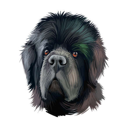 Newfoundland dog with large muzzle watercolor portrait, poster with text. Digital art of purebred canine origitated from Canada and England. Hound with long fur, furry animal with kind hazel eyes Banque d'images - 130994661