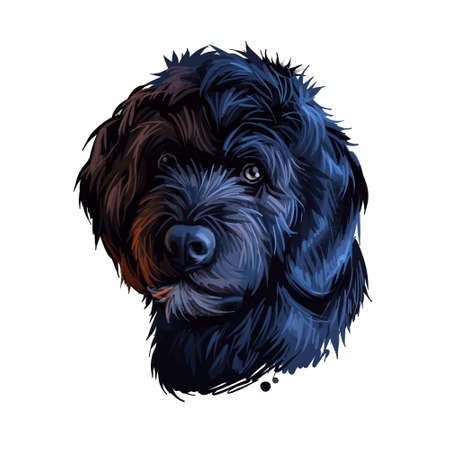 Portuguese Water dog portrait isolated on white. Digital art illustration of hand drawn dog for web, t-shirt print and puppy food cover design. Breed of working dog, cao de agua portugues, algarvio Stock Photo