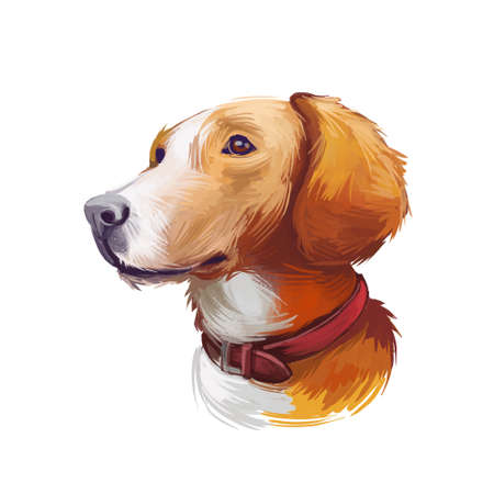 Posavac Hound dog portrait isolated on white. Digital art illustration of hand drawn dog for web, t-shirt print and puppy food cover design. Breed of hunting dog of scenthound type. Scenthound puppy Stock Illustration - 130994851