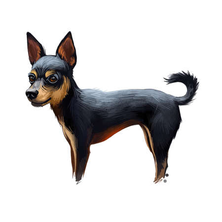 Prazsky Krysarik dog portrait isolated. Digital art illustration of hand drawn dog for web, t-shirt print and puppy food cover design. Prague Ratter small breed of dog from the Czech Republic, PK dog Imagens - 130994852