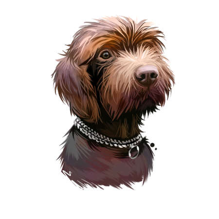 Pudelpointer dog portrait isolated on white. Digital art illustration of hand drawn dog for web, t-shirt print and puppy food cover design. Versatile hunting dog breed from Germany, pet with collar