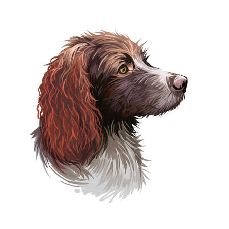 Pont-Audemer Spaniel dog portrait isolated on white. Digital art illustration of hand drawn dog for web, t-shirt print and puppy food cover design. Epagneul Pont-Audeme rare breed of French gundog