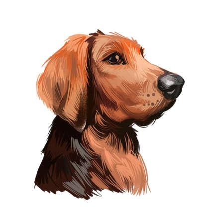 Polish Hound dog portrait isolated on white. Digital art illustration of hand drawn dog for web, t-shirt print and puppy food cover design. Ogar Polski, breed of hunting dog indigenous to Poland Stockfoto