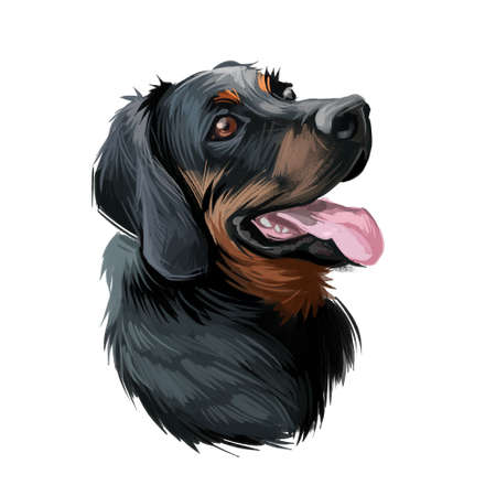 Polish Hunting dog portrait isolated on white. Digital art illustration of hand drawn dog for web, t-shirt print and puppy food cover design. Scenthound Gonczy Polski breed of scent hound, Poland Stockfoto