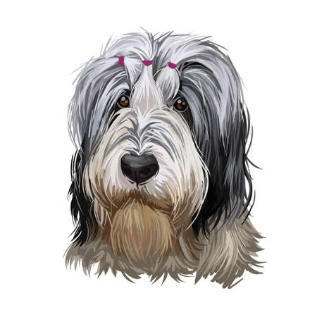 Polish Lowland Sheepdog dog portrait isolated on white. Digital art illustration of hand drawn dog for web, t-shirt print, puppy food cover design. Owczarek Nizinny, PON shaggy-coated, sheep dog breed 写真素材 - 130994860
