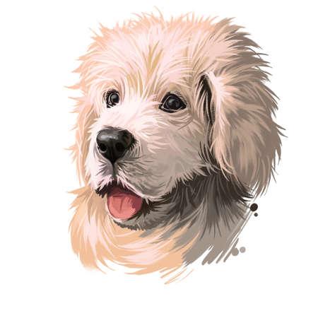 Polish Tatra Sheepdog dog portrait isolated on white. Digital art illustration of hand drawn dog for web, t-shirt print, puppy food cover design. Breed of Tatra Mountains, Vlachian Romanian shepherds.