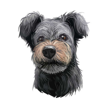 Pumi dog portrait isolated on white. Digital art illustration of hand drawn dog for web, t-shirt print and puppy food cover design. Pumik breed of sheep dog from Hungary, Hungarian herding terrier