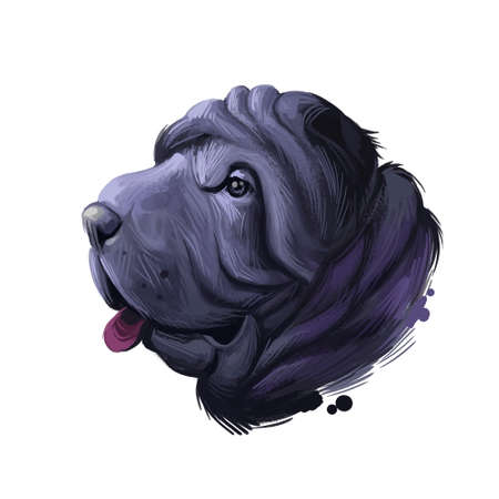 Miniature mini shar pei dog, profile portrait digital art illustration. Pet bred from recessive gene of shar-pei, Chinese originated puppy. Animal from China with wide padded muzzle, highly set ears 写真素材