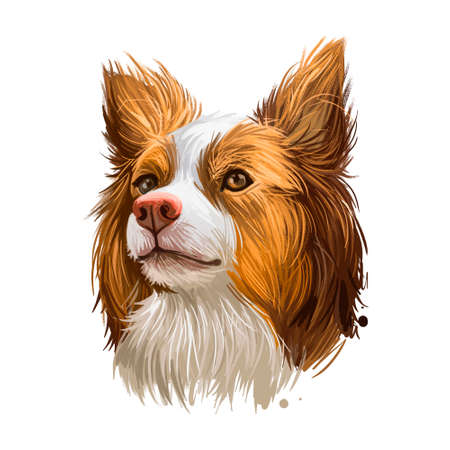 Miniature Australian shepherd, pet originated in USA digital art illustration. Herding working stock dog with long ears. Portrait closeup of profile of Aussi canine, animal from United States