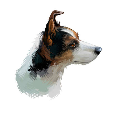 Miniature fox terrier hunting and working dog digital art illustration. Canine portrait, profile closeup of lightweight small and fine puppy. Animal mammal vermin router isolated on green background