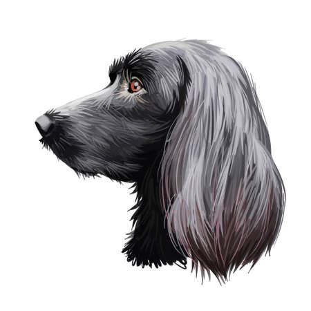 Munsterlander large, German originated dog digital art illustration portrait. Profile closeup of breed purebred offshoot of the longhaired pointer, puppy with long ears. Athletic and intelligent doggy 写真素材