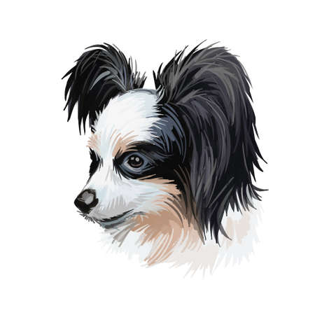 Papillon continental toy spaniel breed portrait watercolor, digital art. Isolated muzzle of lap pet, domestic animal originated from France. French canine of small size, pet with wide ears poster text Stock Photo