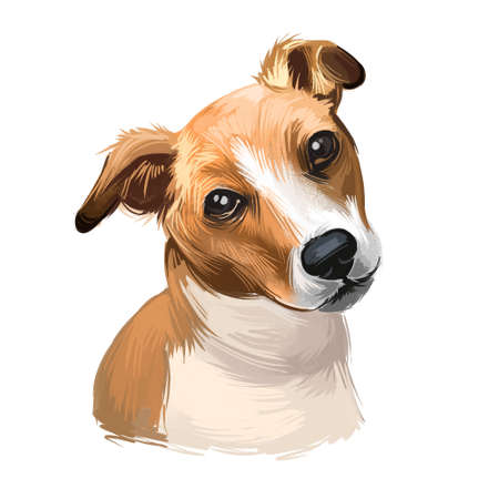 Plummer Terrier dog portrait isolated on white. Digital art illustration of hand drawn dog for web, t-shirt print and puppy food cover design, clipart. Plummer Terrier is a working terrier 스톡 콘텐츠