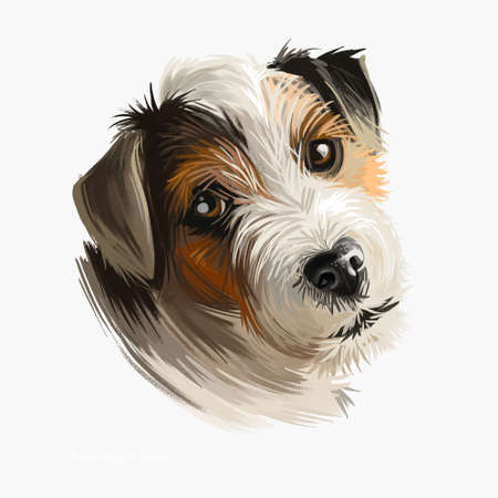 Parson Russell Terrier dog portrait isolated on white. Digital art illustration of hand drawn dog for web, t-shirt print and puppy food cover design. Parson Jack Russell Terrier, original Fox Terrier Stock Illustration - 130997824