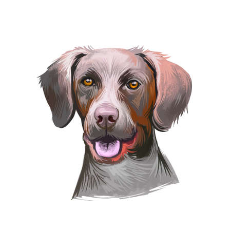 Pointer dog portrait isolated on white. Digital art illustration of hand drawn dog for web, t-shirt print and puppy food cover design, clipart. Bird dogs, are a type of gundog used in finding game