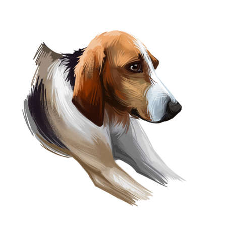 Poitevin dog portrait isolated on white. Digital art illustration of hand drawn for web, t-shirt print and puppy cover design, clipart. Chien de Haut-Poitou, breed of dog used in hunting scenthound Stockfoto