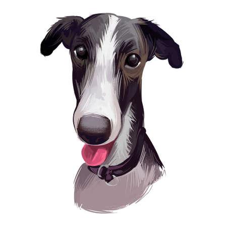 Polish Greyhound dog portrait isolated on white. Digital art illustration of hand drawn dog for web, t-shirt print and puppy food cover design. Chart polski, Polish sighthound breed, puppy with tongue Zdjęcie Seryjne
