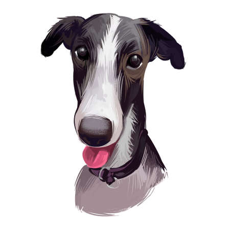 Polish Greyhound dog portrait isolated on white. Digital art illustration of hand drawn dog for web, t-shirt print and puppy food cover design. Chart polski, Polish sighthound breed, puppy with tongue Stock Photo