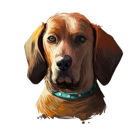 Redbone Coonhound dog portrait isolated on white. Digital art illustration of hand drawn dog for web, t-shirt print and puppy food cover design. Reds breed of dog used for hunting, Redbone Coonhound Banque d'images - 130997855