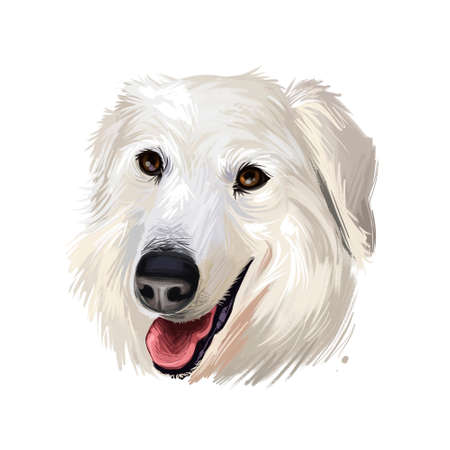Maremma sheepdog ane da pastore maremmano-abruzzese livestock guardian dog indigenous to central Italy digital art illustration. Friendly smiling dog breed of Italian origin. Purebred animal Stock Illustration - 130997876