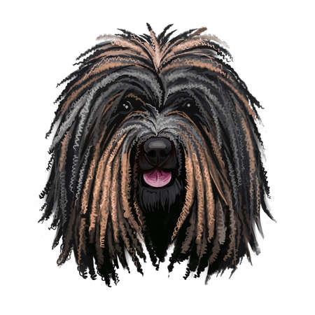 Puli dog portrait isolated on white. Digital art illustration of hand drawn dog web, t-shirt print and puppy food cover design. Breed of Hungarian herding livestock guarding dog with long, corded coat 写真素材