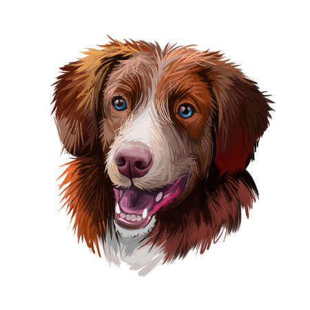 Nova Scotia duck tolling retriever dog watercolor portrait digital art. Poster with pet breed name, purebred showing teeth and tongue. Canine domestic, doggy animal with opened mouth and big ears
