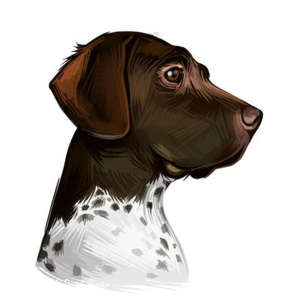 Old Danish pointer dog with spots on short fur isolated digital art. Pet originated from Denmark Scandinavian puppy. Poster with text and portrait of canine looking in distance animal from Scandinavia