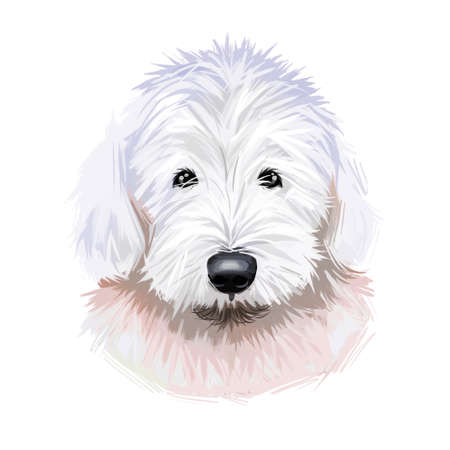 Old English sheepdog used to watch livestock at farms isolated digital art illustration. England originated pet from United Kingdom. Puppy domestic animal with fur, muzzle of canine protective hound Stock Illustration - 130997980