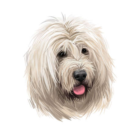 Munsterlander small, German dog digital art illustration. Hunting pointing and retrieving type of purebred animals. Portrait closeup, profile of canine from Munster region isolated vorstehhund Stockfoto