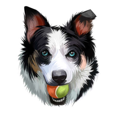 New Zealand heading dog, poster digital art. Isolated watercolor portrait of puppy holding ball in teeth. Playing doggy, purebred pet, animalistic being playful animal. Canine hound with long ears