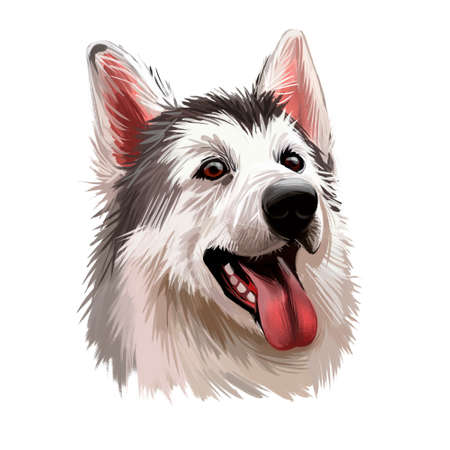 Northern inuit dog, watercolor portrait of canis lupus familiaris closeup digital art. Isolated puppy of England origin showing sharp teeth and long tongue. Canine doggy, pet with furry muzzle poster