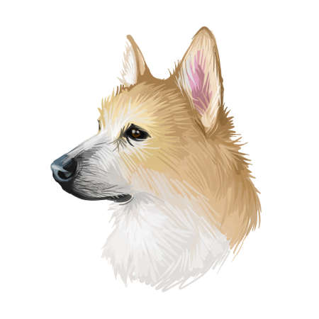 Norwegian, buhund canine originated from Scandinavia, digital art. Isolated puppy of Norway origin poster with text and breed name. Purebred domestic animal, pet mammal, having long muzzle watercolor