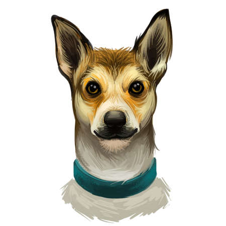 Norwegian lundehund wearing collar front view of pet digital art. Isolated watercolor portrait of domestic mammal of Scandinavian origin. Hound canine of unique and rare breed, animal type poster text Фото со стока