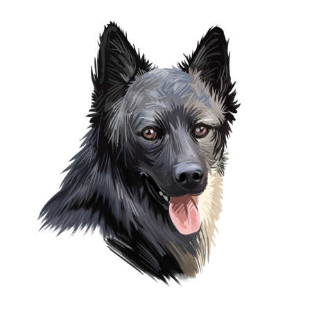 Lapponian herder dog canine closeup of pet digital art illustration. Lapinporokoira hound with stuck out tongue, lapsk vallhund originated in Finland. Portrait of puppy domesticated breed pet