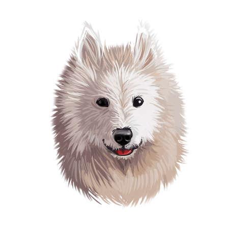 Samoyed dog portrait isolated on white. Digital art illustration of hand drawn dog for web, t-shirt print and puppy food cover design. Bjelkier, Samoiedskaya Sobaka, Nenetskaya Laika, Smiley Sammy Stock Photo