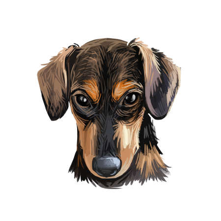 Serbian Hound pet digital art, watercolor hand drawn poritair of canine. Domestic animal from Serbia and Montenegro, Balkan puppy with long ears and smooth fur. Фото со стока