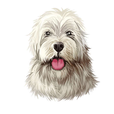 Sapsali dog portrait isolated on white. Digital art illustration of hand drawn dog for web, t-shirt print and puppy food cover design. Shaggy South Korean breed of dog, Sapsal Gae Sapsaree Stock Illustration - 130996613